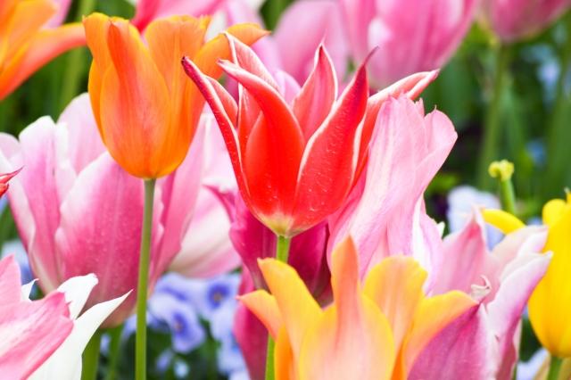 3月の誕生花&誕生石