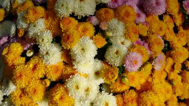 11月の誕生花&誕生石